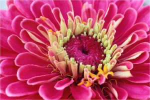wisdom words-celebrate the Divine in you