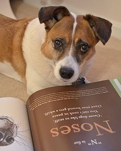 Can a dog help you sell books in Kindle?
