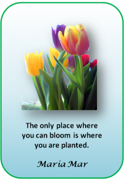 Artspiration No. 17: Bloom where you are planted