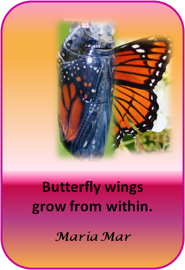 artspiration-59-butterfly-wings-from-within