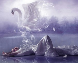 Story: The Veils, the Shadows and the Swan